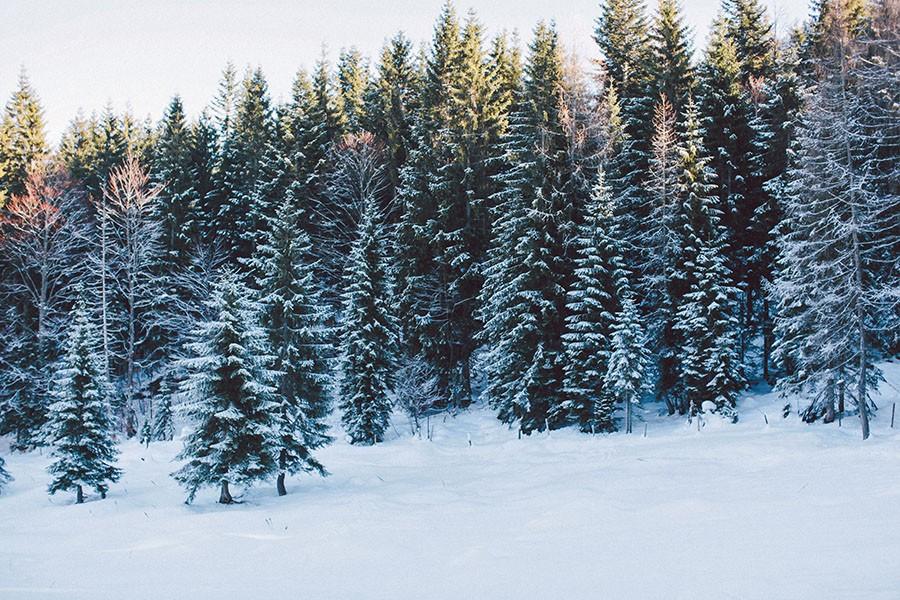 winterlandschft