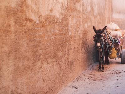 Marokko mit Kind // Nancy auf Reisen